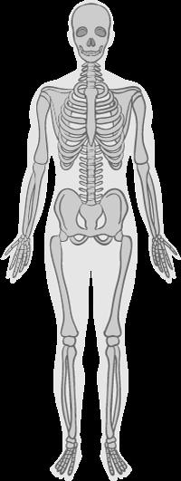整体・骨格