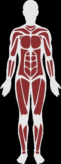 整体・筋肉